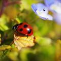 Photos: もうすぐ春ですね~!(^^)!