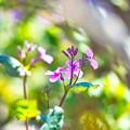 写真: 春風~