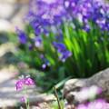 写真: 我が家の春~