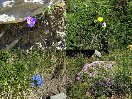 160718-13花々2