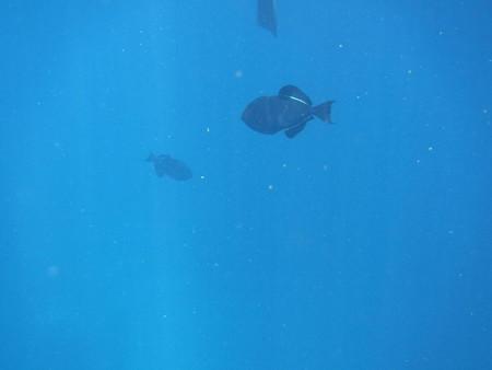 160830-21魚影少なし