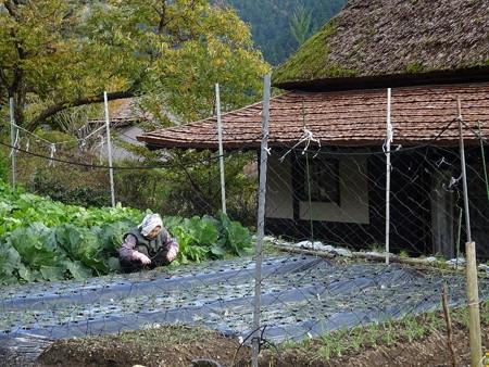 161116-07農作業する人1