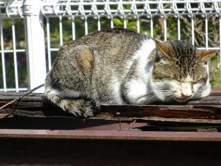 170227-8日溜りの眠り猫