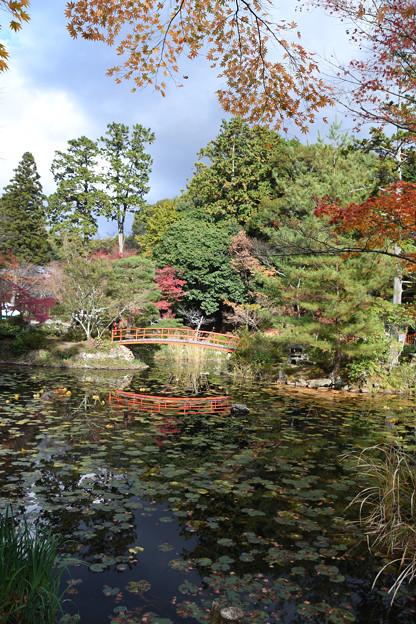 鯉沢の池まわり2