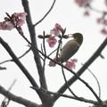 Photos: こら、早く咲けよ