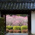 写真: 本堂方面から梅園を