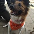 Photos: つくしオレンジ似合うわ~♪