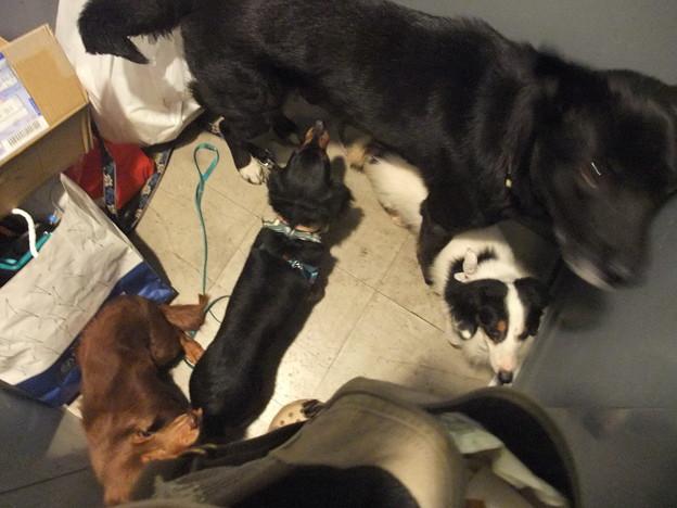Photos: 保護犬トリオ