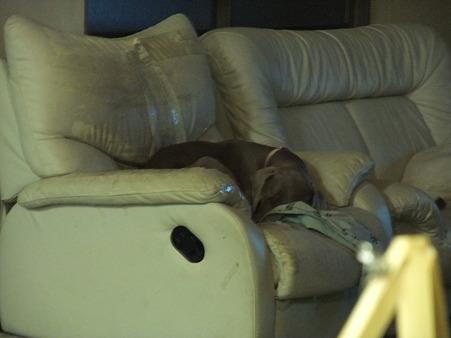 ソファー静かに寝ています