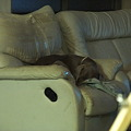 Photos: ソファー静かに寝ています