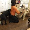 Photos: さすが大型犬経験者様