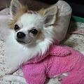 Photos: 2010121323290000