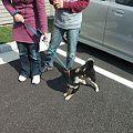 Photos: 散歩行きたい~~!!