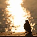 写真: 朝陽の洗礼