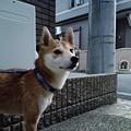 Photos: バロンくん2