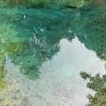 Photos: 水の森