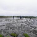 写真: 11年田植えイベント (4)