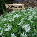 稚内市北方植物園にて