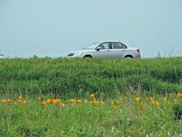 エゾカンゾウ咲く宗谷国道を行く