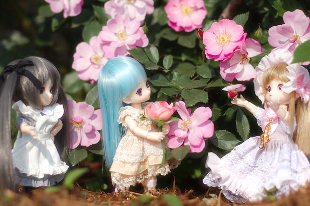 おぉ~!バラにゃー