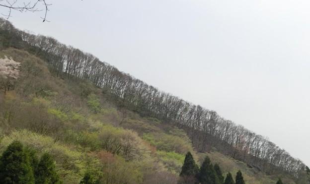 0416能勢妙見山10