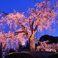Photos: そうだ 京都、行こう。