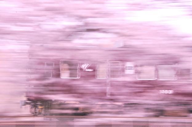 Photos: 桜坂を疾走する