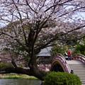 写真: 称名寺境内の桜!20150329