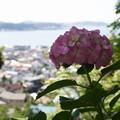Photos: 鎌倉の海とアジサイ20160611