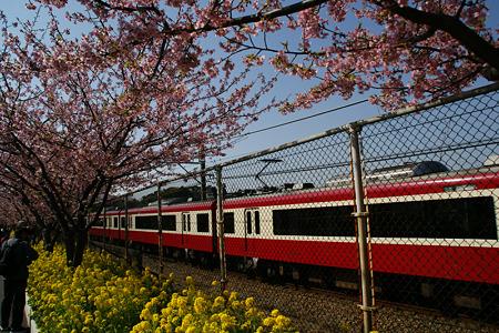 河津桜の中を走る電車!(110226)