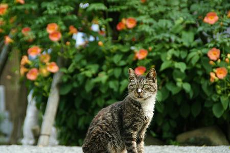 お寺の猫!(110709)