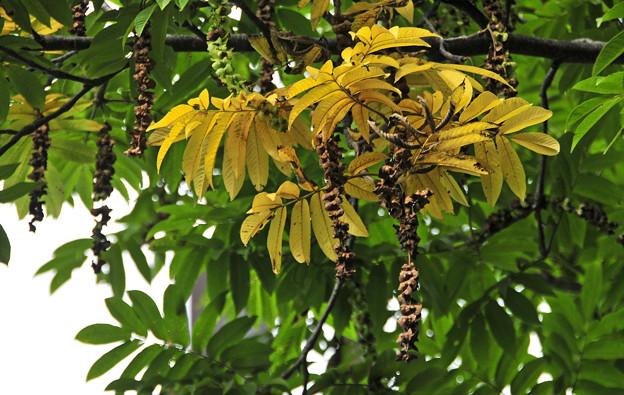 秋のゴールデンツリー