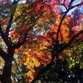 写真: 横浜公園の紅葉