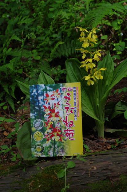 町田えびね苑チケット