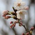 Photos: 咲きたてほやほや。。。