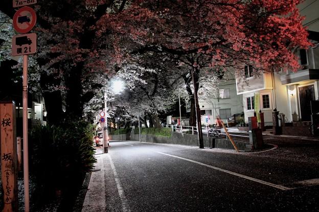 Photos: 夜桜坂