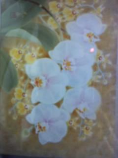胡蝶蘭の絵です。