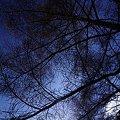 Photos: カラマツ森の空