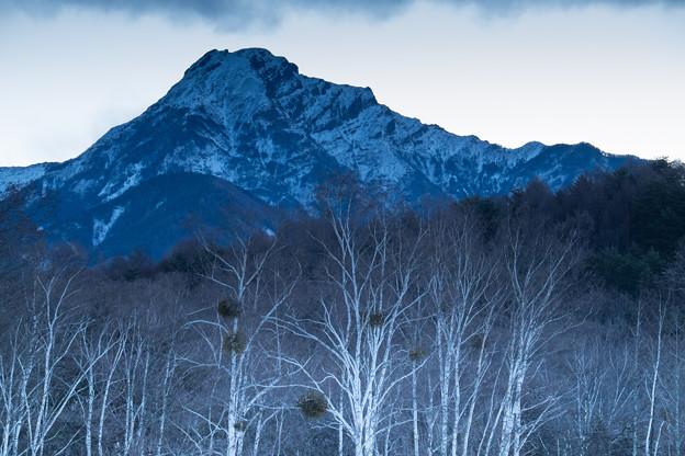 白樺林と八ヶ岳(日の出前)