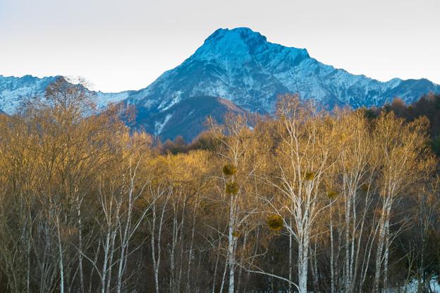 白樺林と八ヶ岳(日の出後)