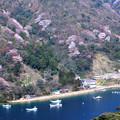 『常神半島・神子の山桜』