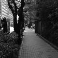 写真: IMG_3708