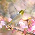 写真: 春呼鳥