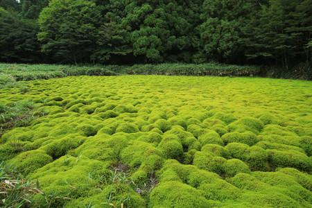 笹倉湿原 (3)