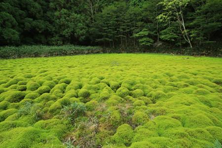 笹倉湿原 (6)
