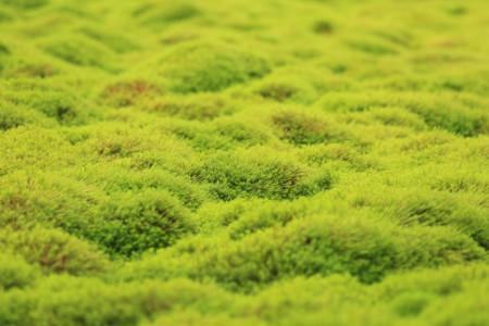 笹倉湿原 (11)
