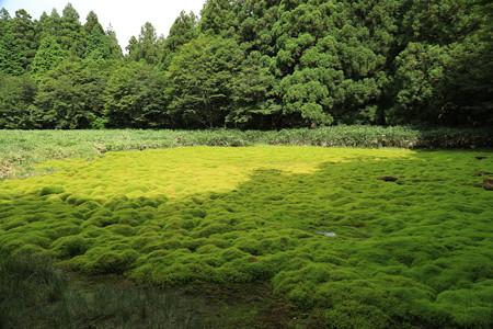 笹倉湿原 (12)