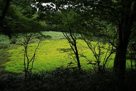 笹倉湿原 (15)