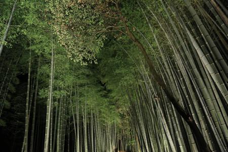 花灯路・竹林の小径 (2)