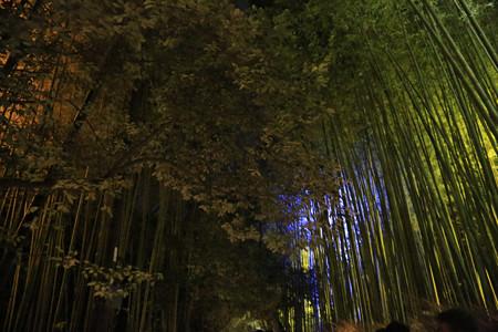 花灯路・竹林の小径 (3)